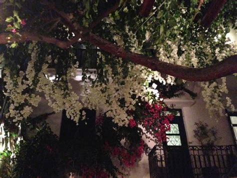 overhead ceiling  flowers picture  avra restaurant