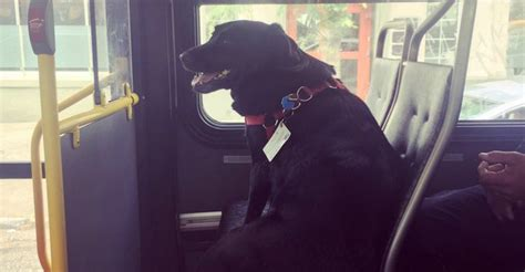 dogs eclipse metro eclipse rides seattle all the way to the park