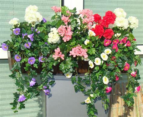 Die Schönsten Balkonpflanzen 3395 by Blumenk 228 Sten Bepflanzen Sommer Sommer Bepflanzte Blumenk