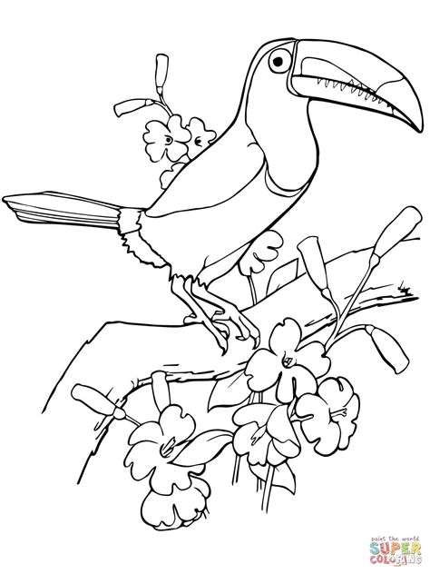 coloring page of a toucan bird keel billed toucan coloring page free printable coloring