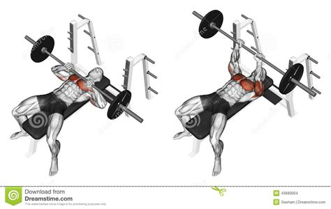bench muscles bench muscles 28 images bench press tips choosing the right bench press grip