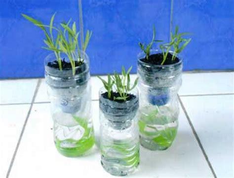 menanam mint hidroponik cara menanam tanaman hidroponik bibitbunga com