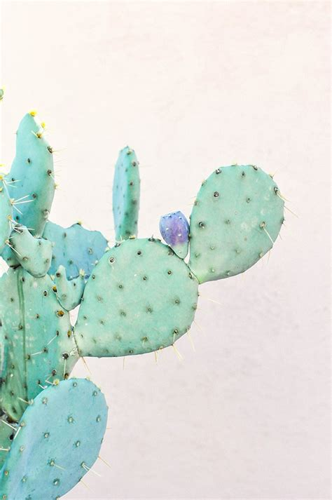 wallpaper for iphone cactus properprintables cactus wallpaper download