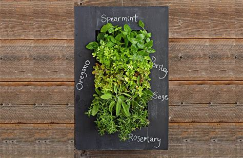 living wall herb garden 17 vertical garden ideas that will your mind garden