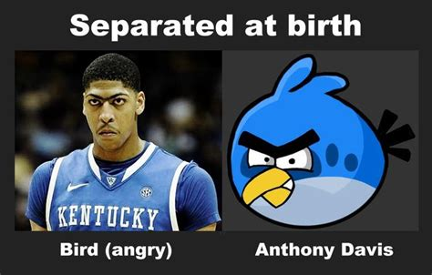 Anthony Davis Memes - anthony davis vs angry birds total college memes