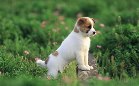 cute dog wallpapers for windows dog windows 10 wallpapers