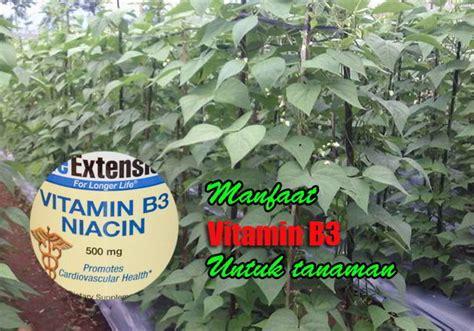 Pupuk Untuk Menyuburkan Bunga manfaat vitamin b3 untuk tanaman menyuburkan tanaman