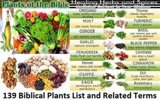 foods of the bible 139 biblical plants list and related terms the of judah society