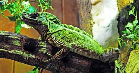 interesting facts  lizards
