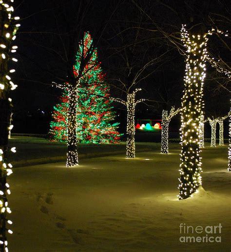 chicago botanic garden christmas lights holiday lights at chicago botanic garden photograph by