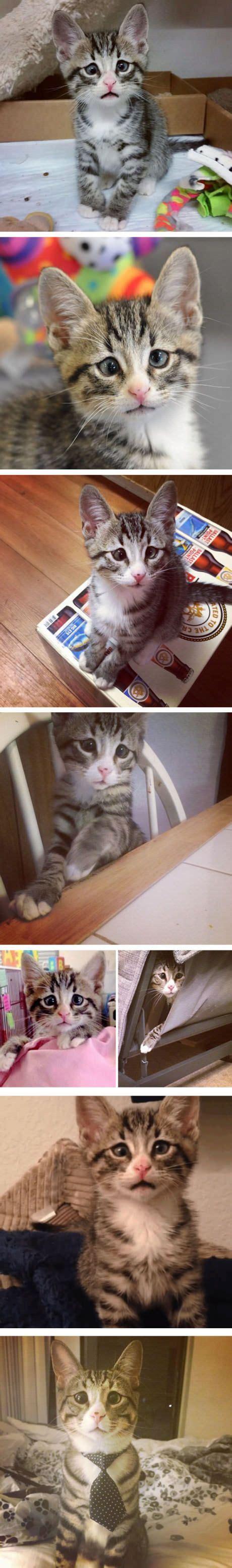 banana kitten named orfey cats best 25 kitten names ideas on cat names