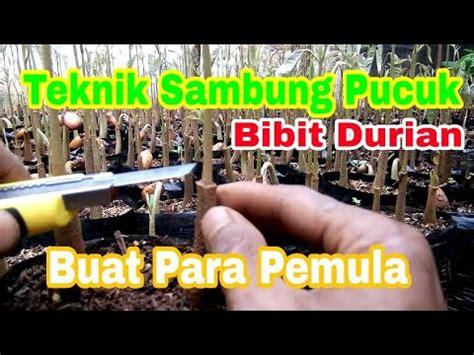 Nature Stek Bunga Dan Buah teknik sambung pucuk mangga supaya berbuah lebat doovi