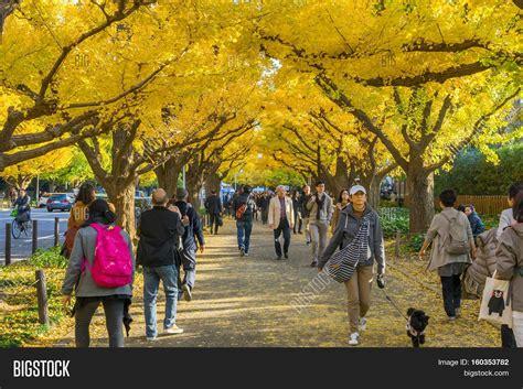 november tokyo tokyo japan november 20 2016 image photo bigstock