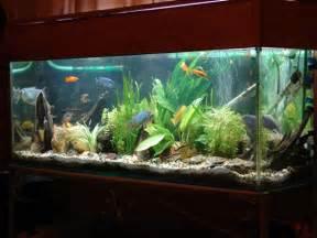 home fish tanks home fish tank