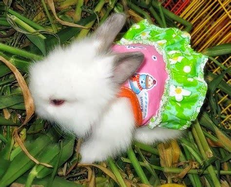 Bando Kelinci Bayi Dan Anak 1 anak kelinci lucu dan imut gambar foto kelinci