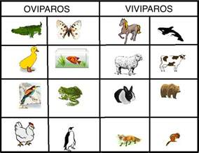 does la colors test on animals animales oviporos