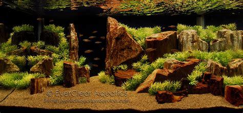aquascape richmond everclear aquarium service aquarium design installation