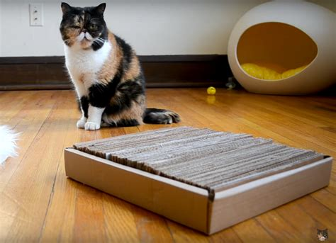how to keep cat off bed keep cat off bed 28 images sofa scram electronic pet trainer mat to keep pets off