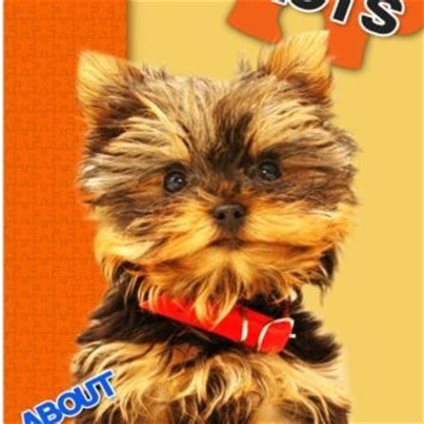 interesting facts about yorkies shop facts on wanelo