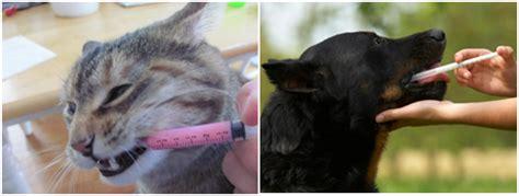 Obat Cacing Pada Kucing obat antibakteri yang disarankan untuk infeksi pada anjing dan kucing