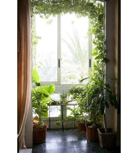 Decorating Home With Plants by 15 Gorgeous Phyto Design Ideas And Indoor Plants For
