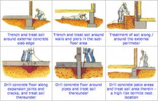 what kills termites home remedies ultimate guide to termite treatment cost and inspection cost