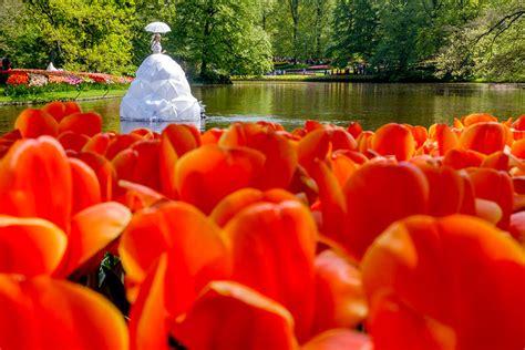 imagenes de hola jardin keukenhof el jard 237 n m 225 s colorido de europa en primavera