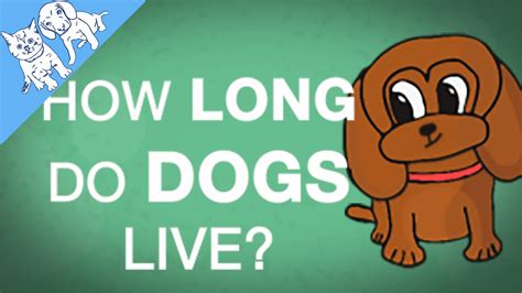 where do dogs live how do dogs live explained