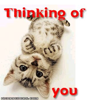 thinking of you kitten graphic