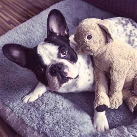 syringomyelia in dogs cavalier king charles spaniel health and nutrition petcarerx