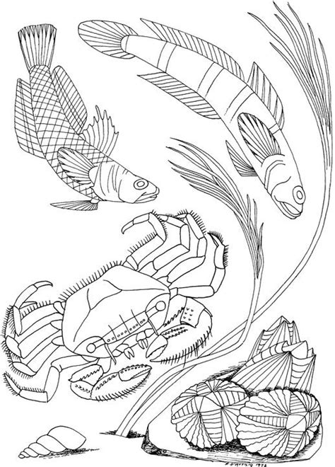 seascape free coloring pages