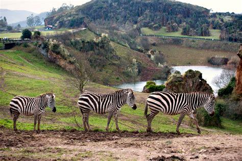 parque cabarceno entradas parque de la naturaleza de cab 225 rceno cantur cantabria