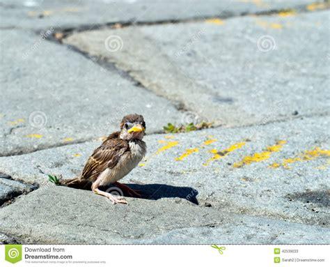 One Fallen Sparrow In Street Biblical Parable Or Metaphor Fallen Sparrow