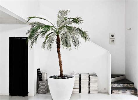 Pflanzen Im Schlafzimmer Ja Oder Nein by Eine Palme Im Interieur Alles Was Du Brauchst Um Dein