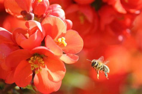 bienen halten im garten h 252 hner halten und imkern ankes garten als honeyfarm