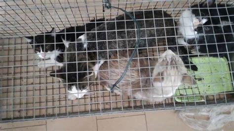gabbia gatto gatti selvatici in gabbia
