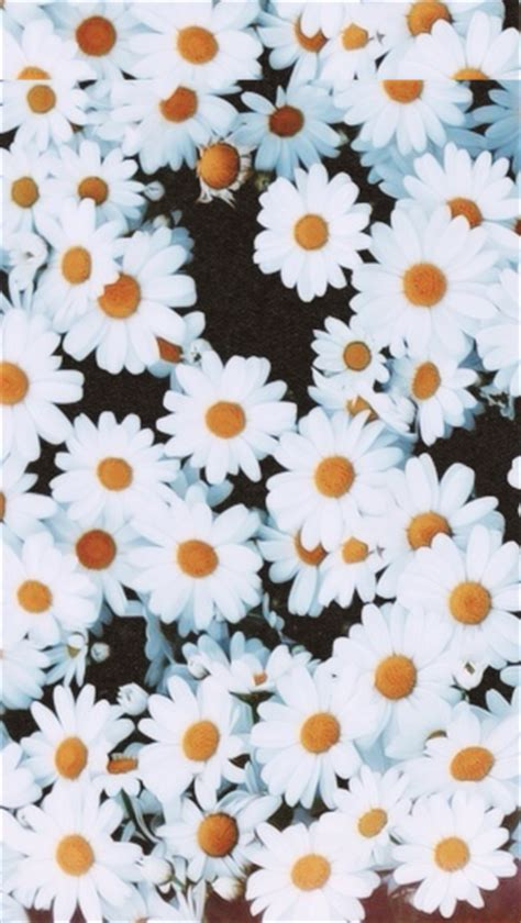 wallpaper flower for iphone 5 tumblr by giselle tumblr
