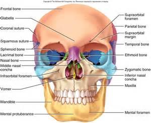 Figura 1 vista frontal del cr 225 neo humano