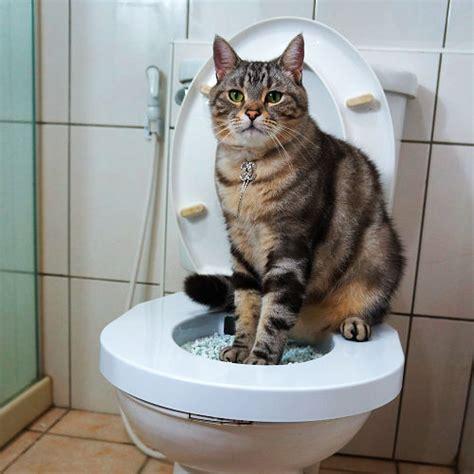 good cat kit kitty pet toilet seat training system litter