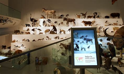 visual communication design melbourne museum wild amazing animals in a changing world segd