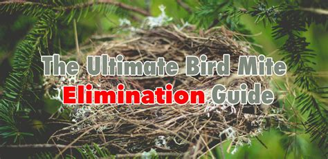 how to get rid of mites how to get rid of bird mites birdmiteguide