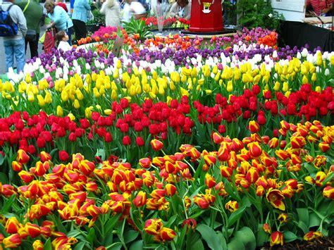 Melbourne Flower Garden Show Melbourne Flower And Garden Show A Photo On Flickriver