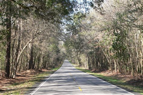 south carolina highway 61 wikidata