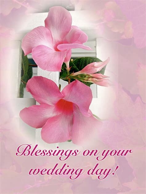 Wedding Blessing Nature by Wedding Blessings Card Pink Mandevilla Vine Photograph