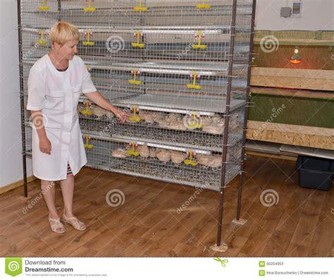gabbia quaglie la lavoratrice agricola sta vicino ad una gabbia con le