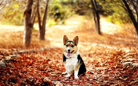 dog wallpapers esther siddiqi download for free free puppy wallpaper and screensavers wallpapersafari