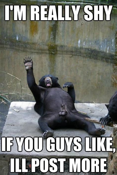 Extremely Funny Memes - 35 most funniest bear meme pictures and photos