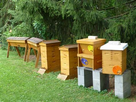 backyard honey bee hive backyard beekeeping in the veggie gardening tips apiary