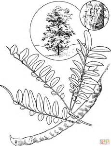 honey locust coloring page supercoloring com