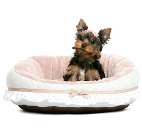 cute girl dog beds beds modern cute dog beds small dogs australia for girl uk